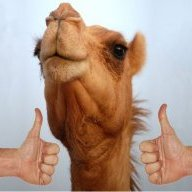 Camel with 2 thumbs